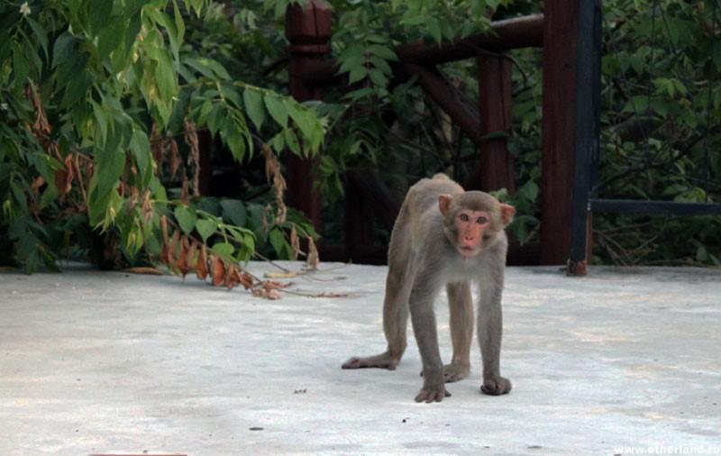 Санья. Хайнань. Наглая обезьяна