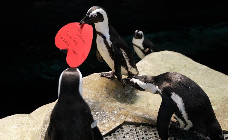 Пингвин Говард